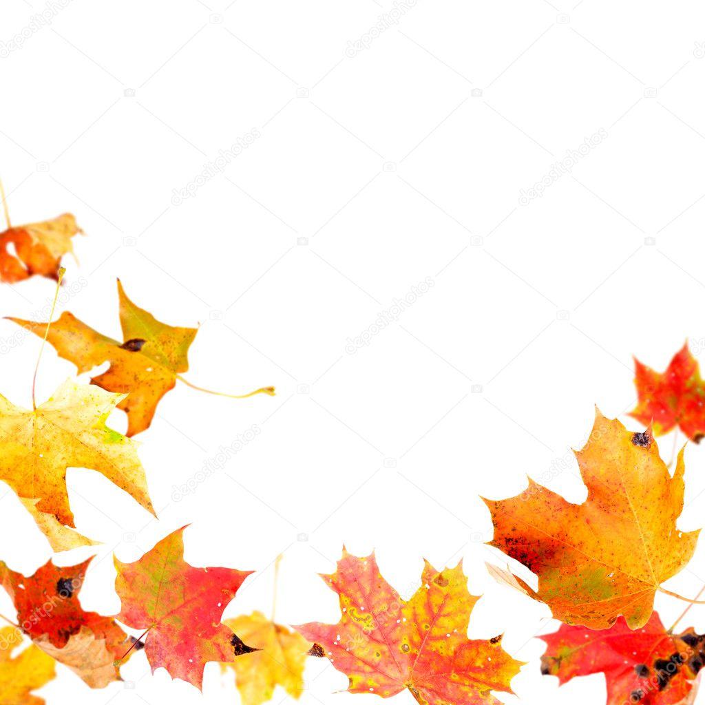 fall borders clip art free