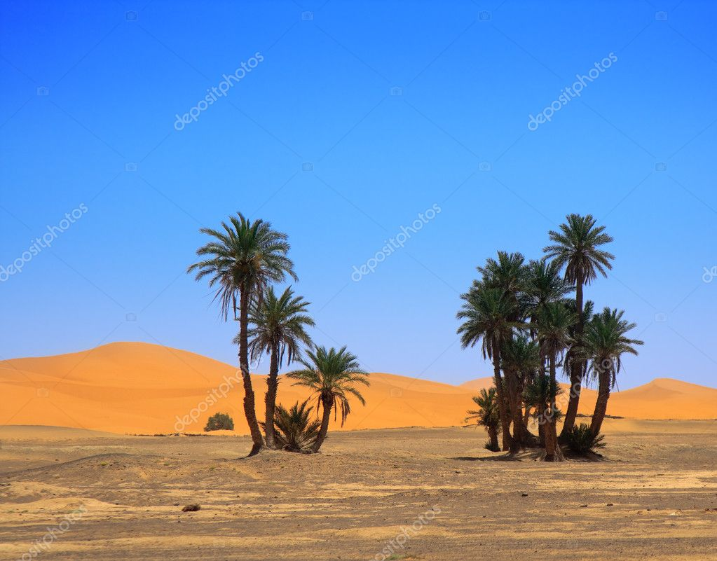 Palm trees and cloudless sky