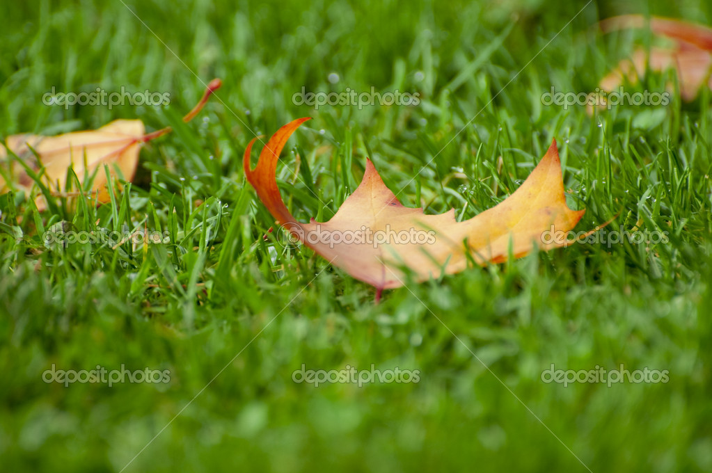 Leave on grass