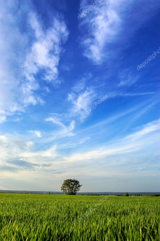 Tree in the field with blue sky above