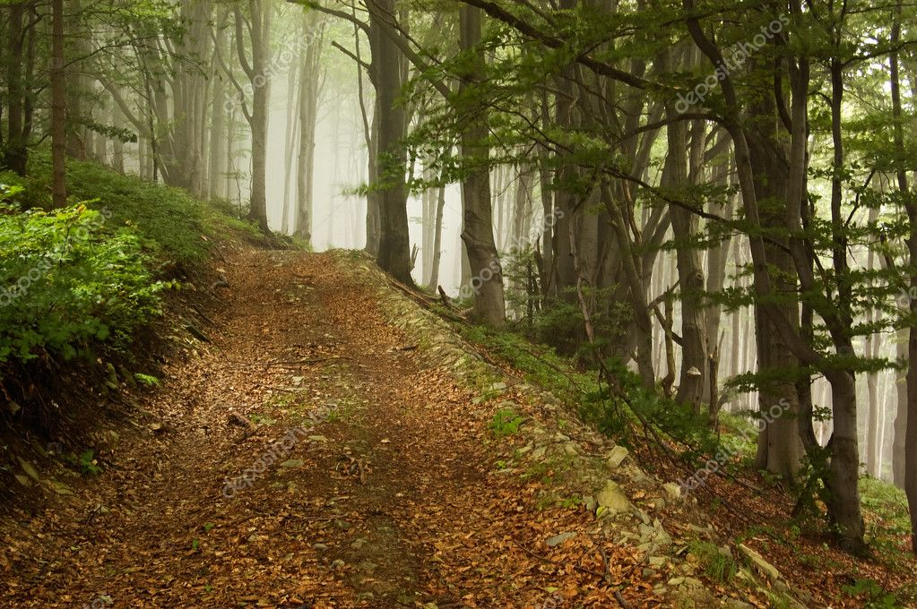 Forest path leading up to the mountain