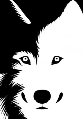 Vector illustration of a wolf looking at us clip art vector