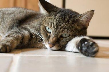 Cat Resting on Ceramic Tile Floor