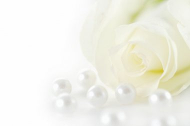 Beautiful white rose with pearls