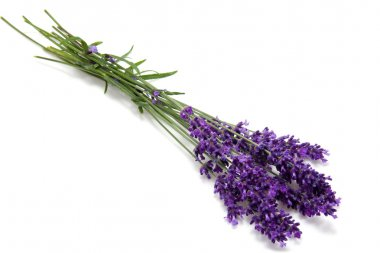 Plucked lavender