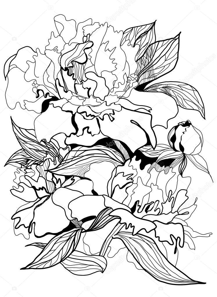 Drawing peony