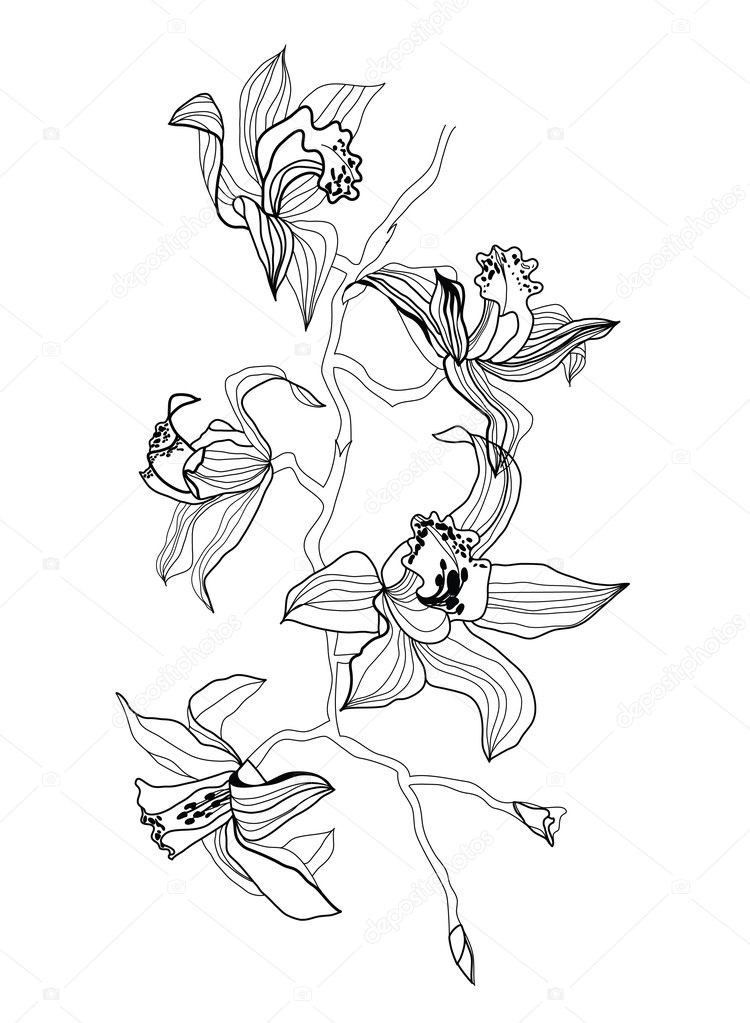 drawing orchid branch stock vector vergasova 2235699. Black Bedroom Furniture Sets. Home Design Ideas