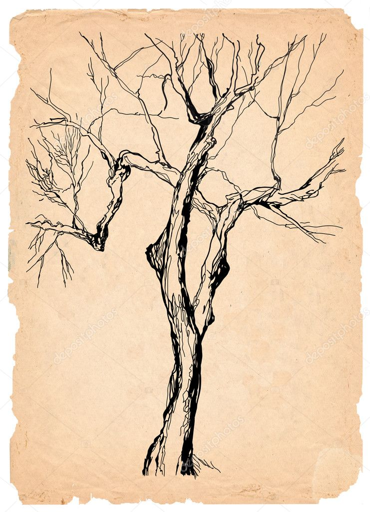 Old tree shabby paper pencil drawing