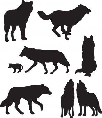 Wolfs vector