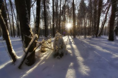 Russian forest. All Seasons