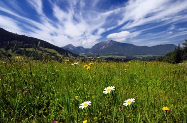 Fields and meadows in Alps