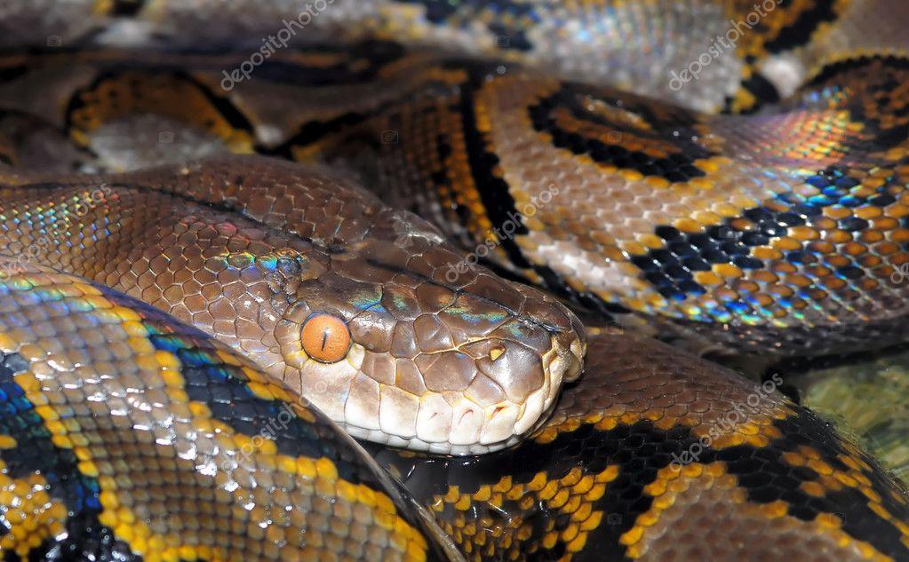 Closeup image of camouflaged python