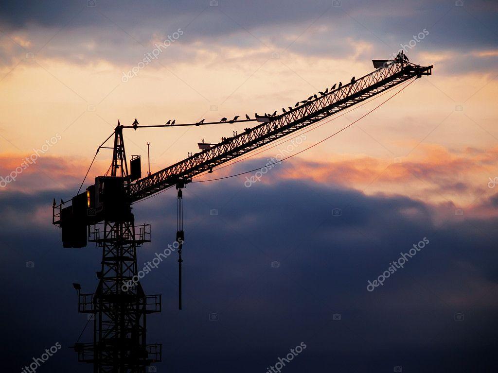 Birds at tower crane