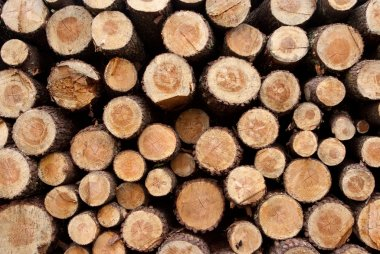 Detail of a Timber background