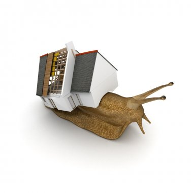 Snail with house