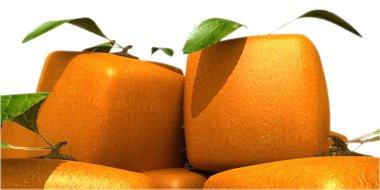 Futuristic oranges close-up