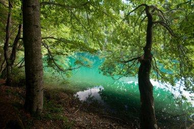 Lake Tovel in the Brenta Dolomites