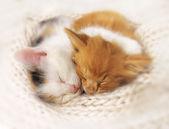 két alvó cica