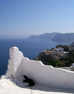 Santorini cat 03