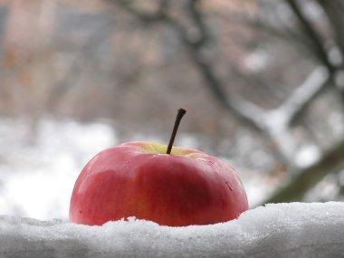 bir kar içinde elma