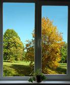 Fotografie pohled z okna