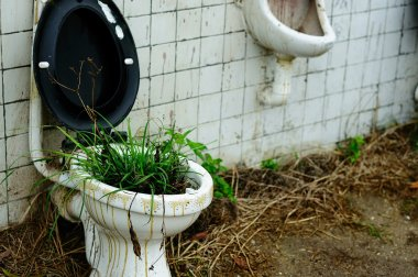 Grasses in a commode