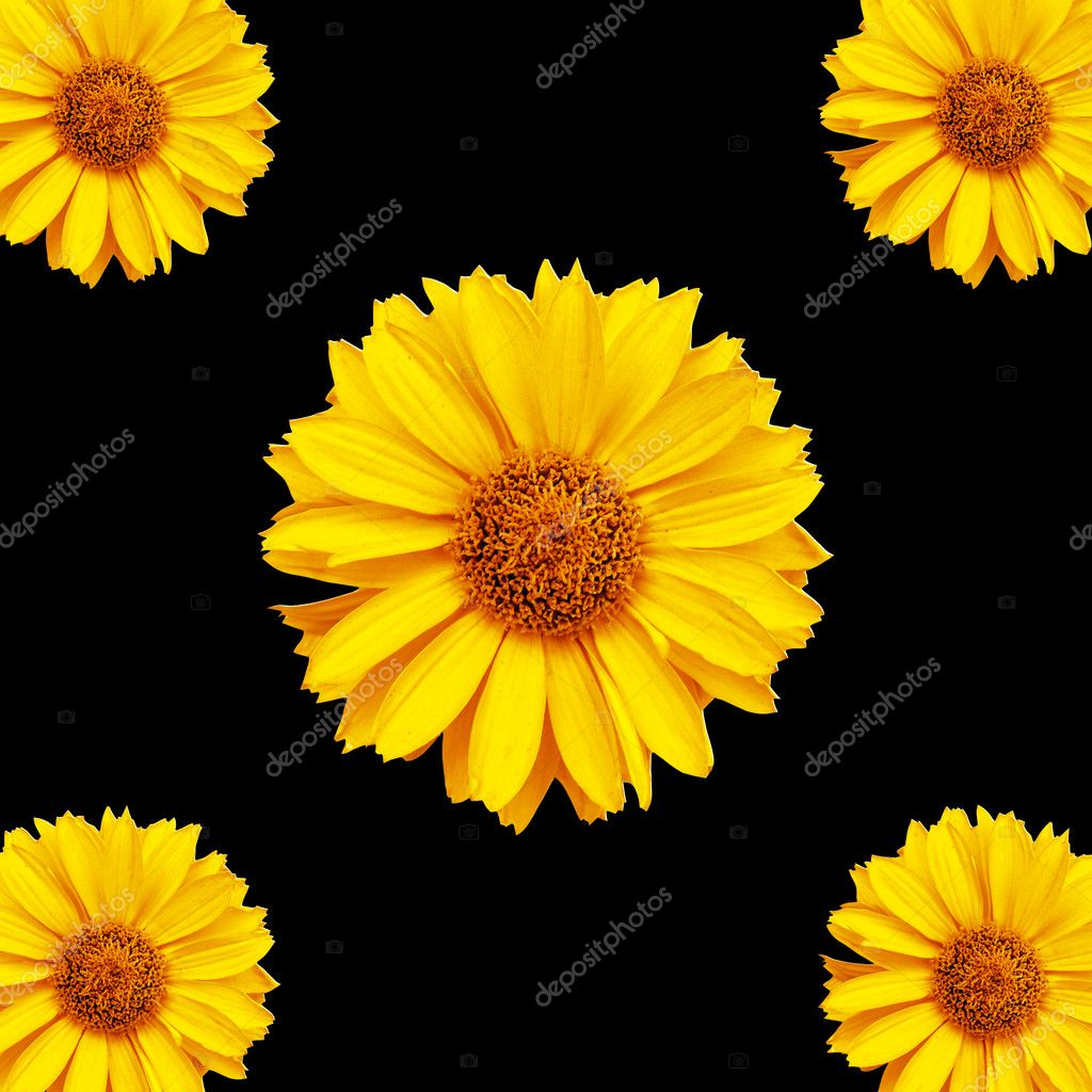 Flowers background 2