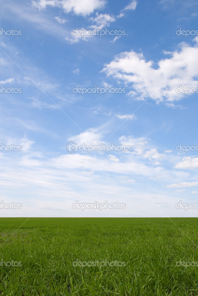Green grass field under the summer sky
