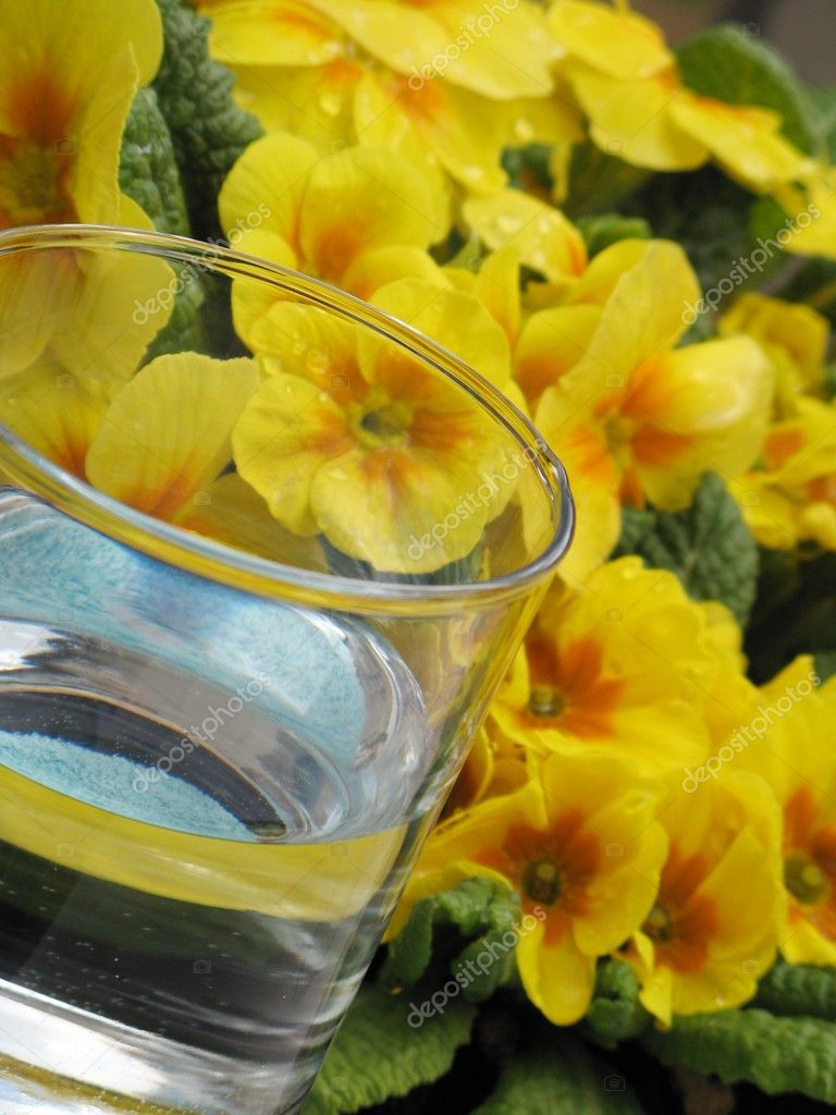Glass of water and primrose - detail