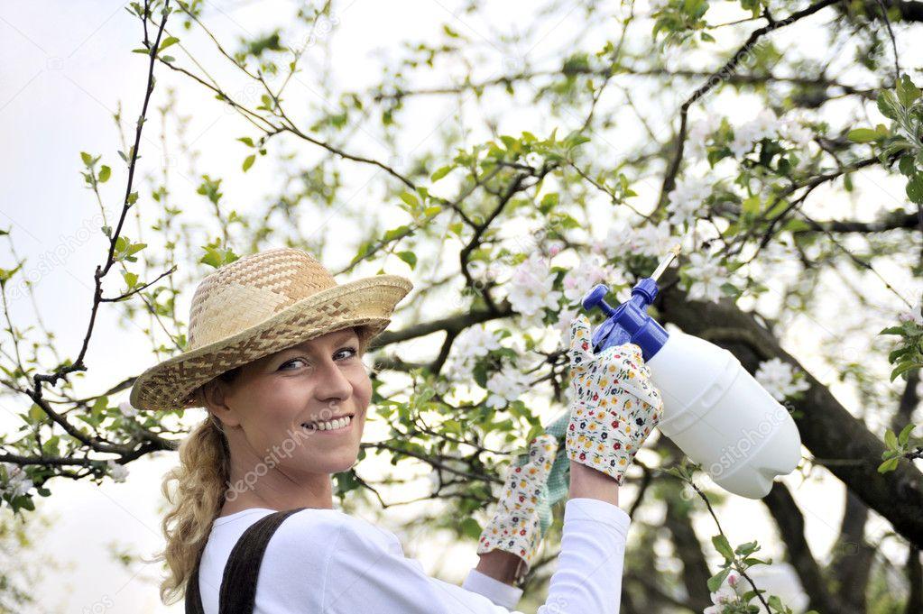 Young woman spraying apple tree