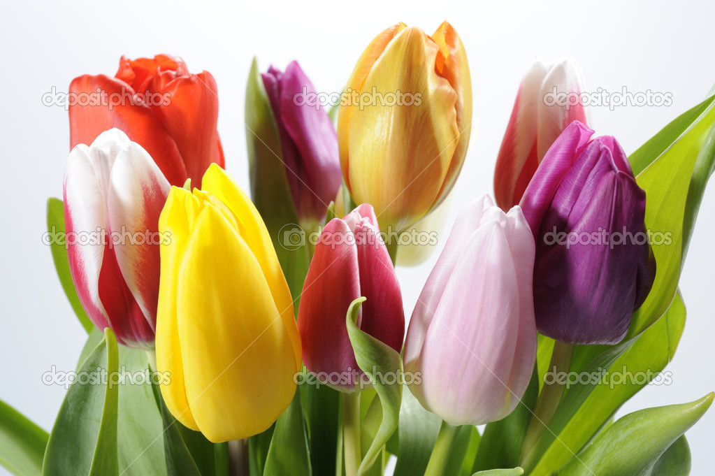 Bunch of tulips flowers