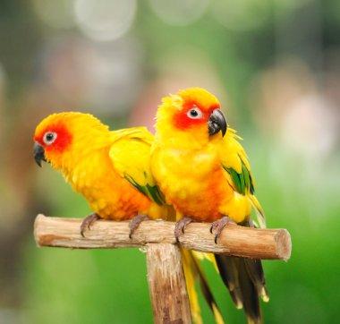 A colourful parrots