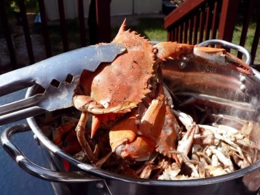 Crab - cooked blue crabs in pot 08