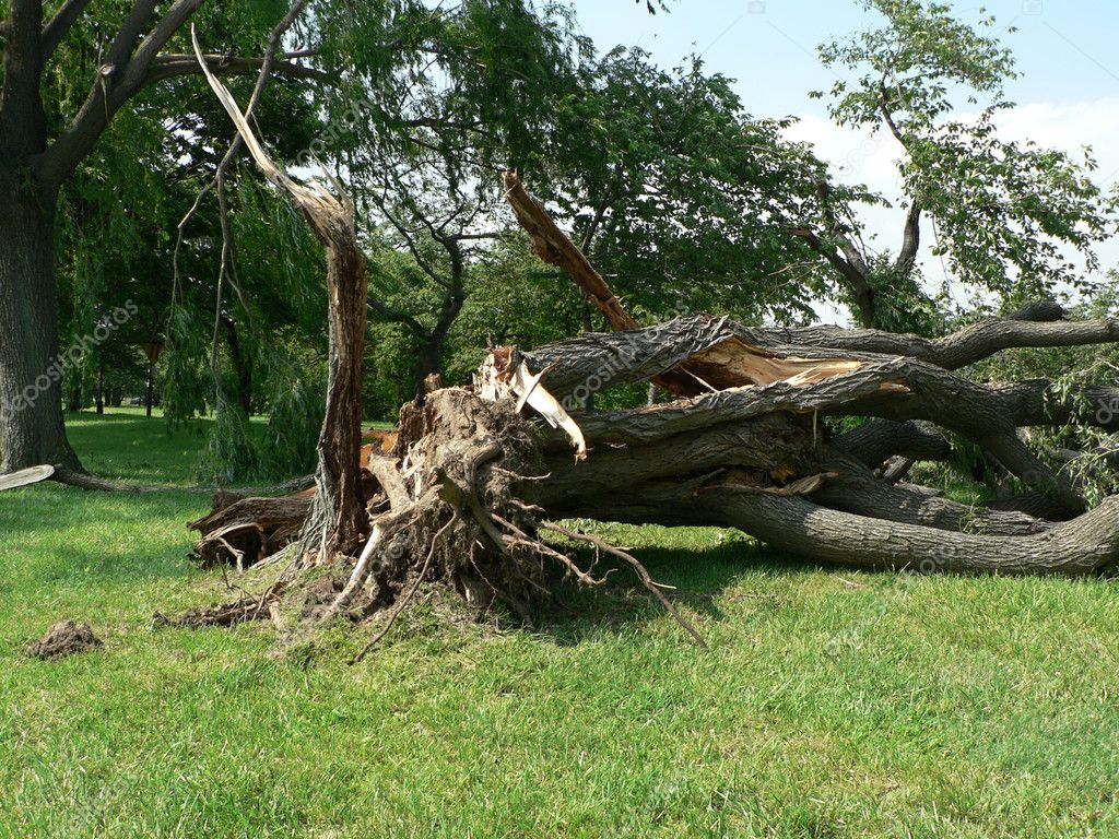 Storm damage - tree down 4