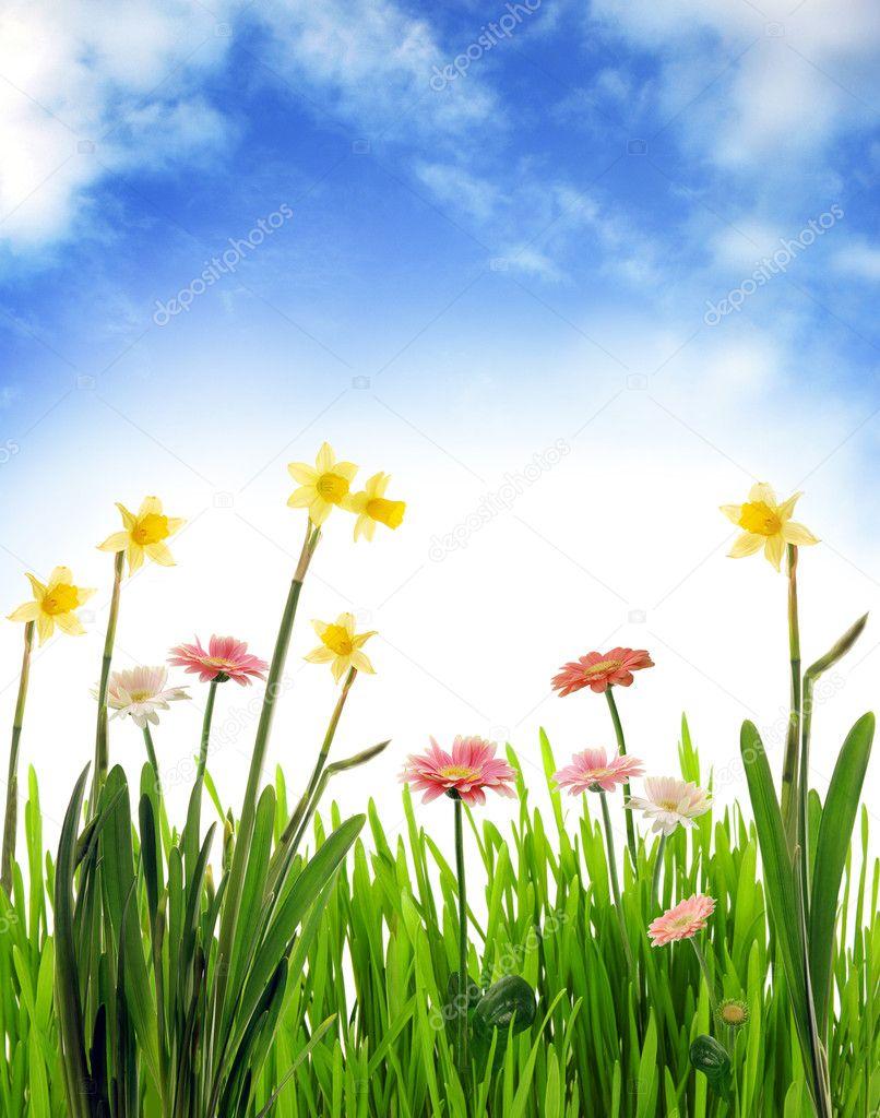 Fiori di primavera foto stock miiisha 2238175 for Fiori di primavera