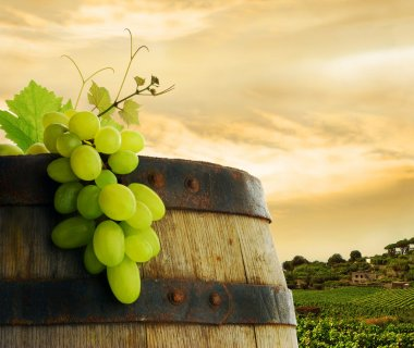 Wine barrel, grapes and vineyard