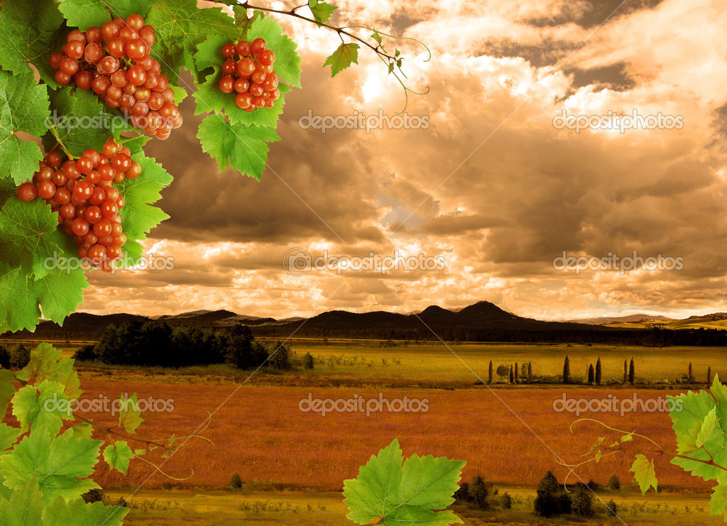 Grapes, grapevine and sunset