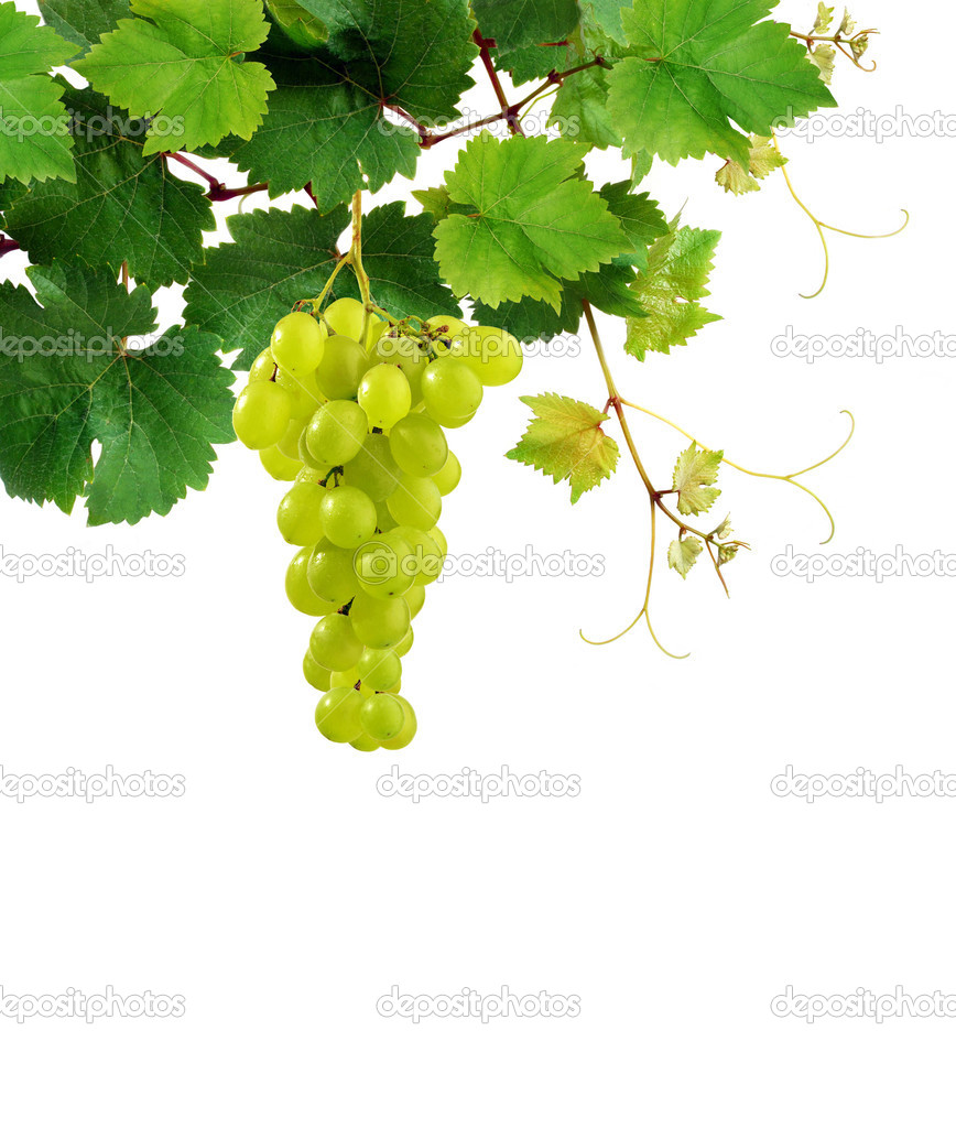 Grapevine with grape cluster