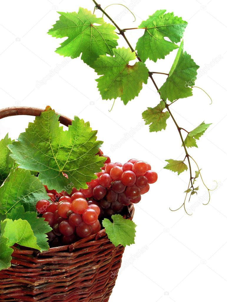 Pink grape in basket with vine