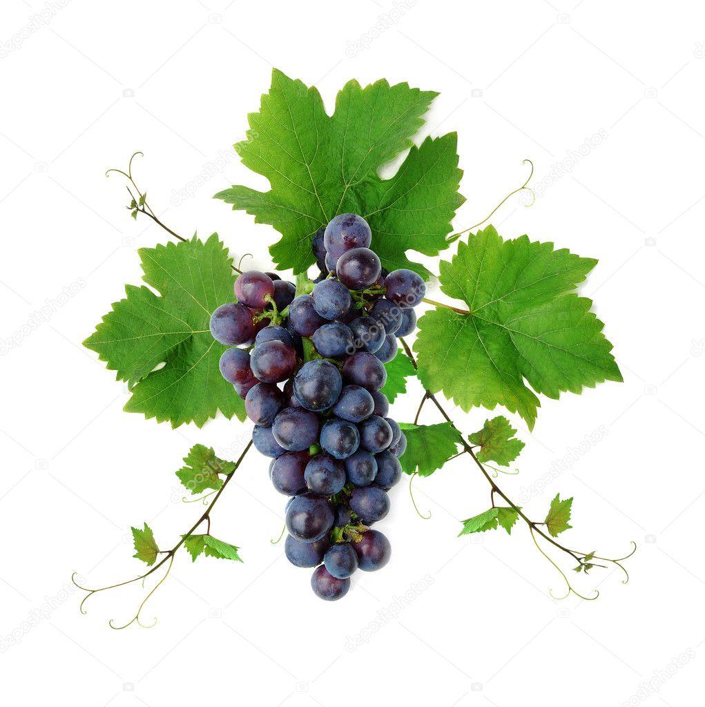 Decorative fresh blue grape