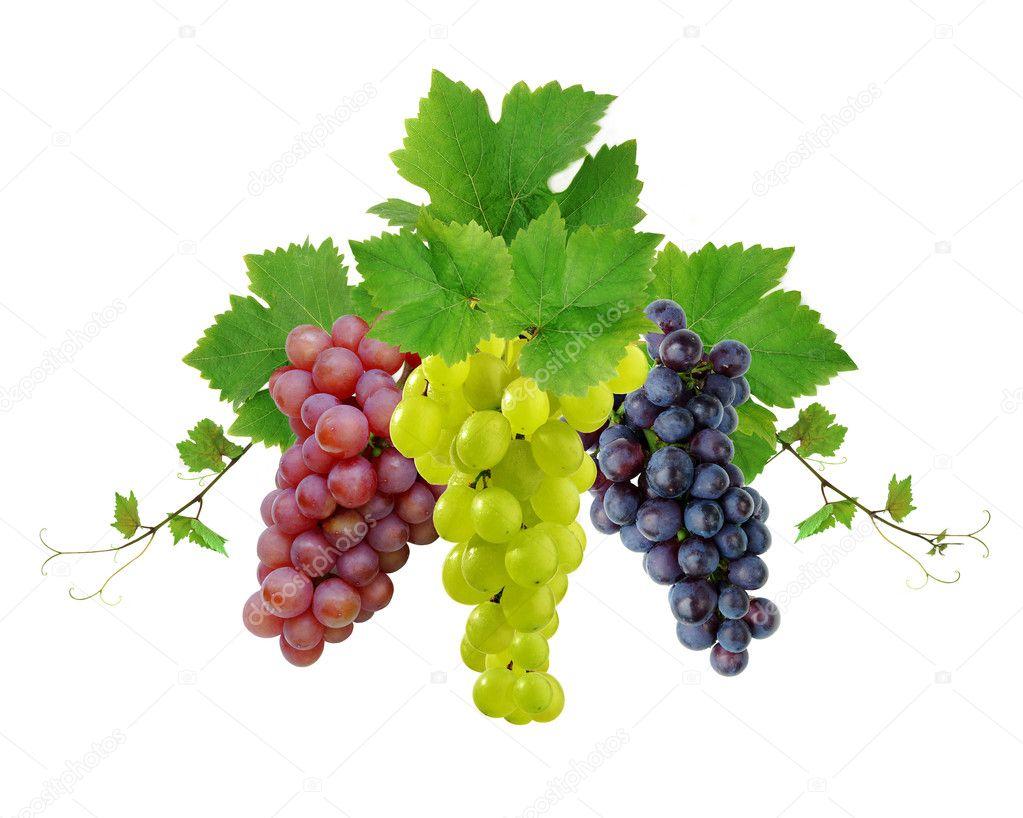 Three decorative grapes