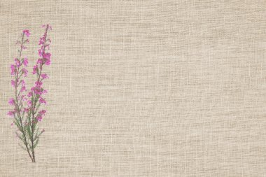 Beauty heather on linen background