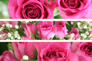 Three Pink Roses Landscape Images