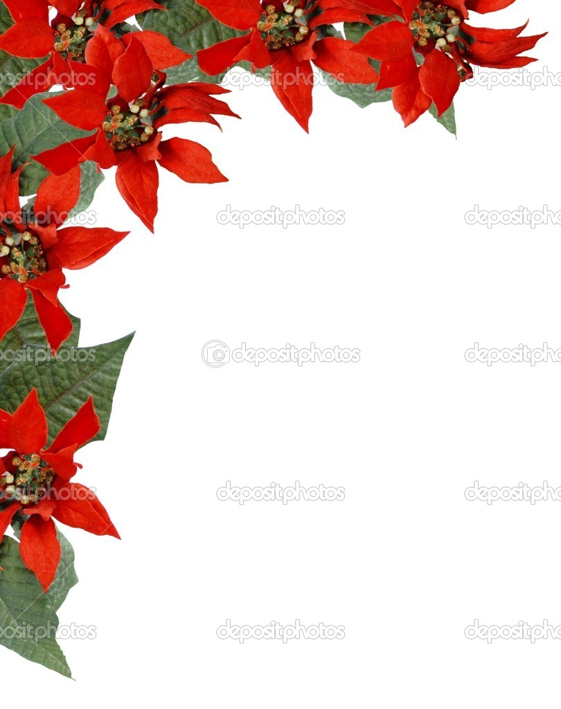 poinsettia borders