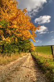 Country road and autumn rural landscape