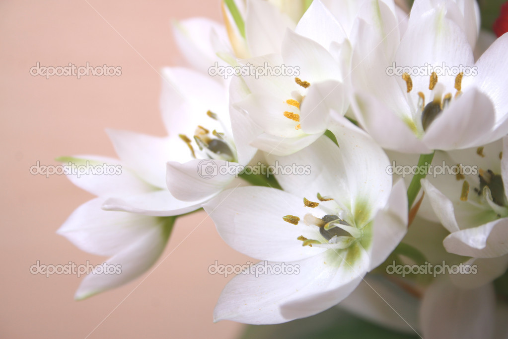 Flowers bouquet close up