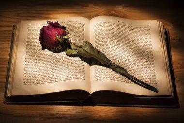 Dried Rose and Book