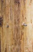trama tronco dellalbero di pino