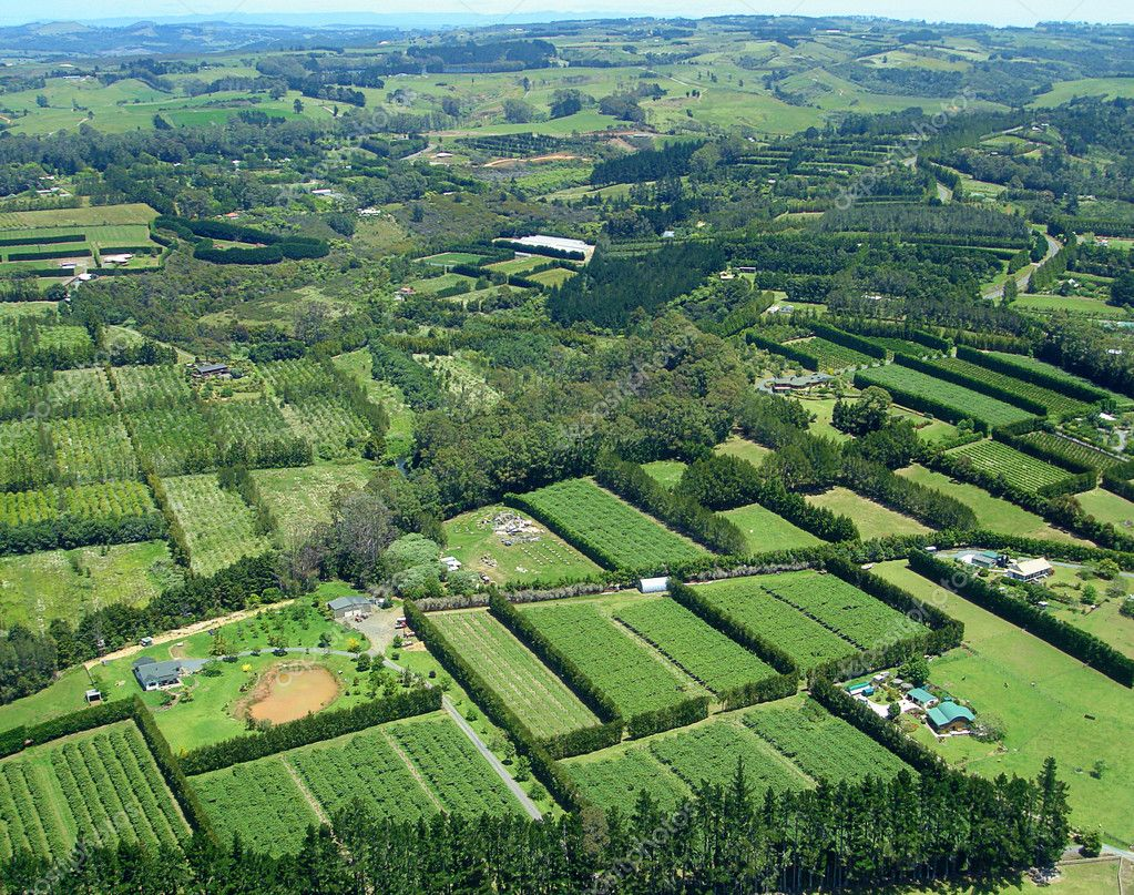 Aerial view of Vineyards and Farms