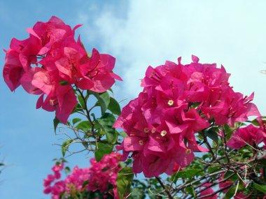 Tropical exotic flowers of Borneo